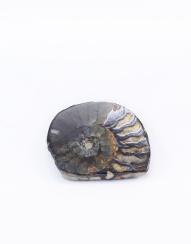 Amonit polovina